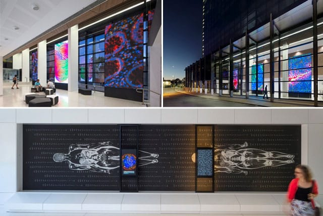 Examples of the stunning art installations found at the new Harry Perkins Institute of Medical Research