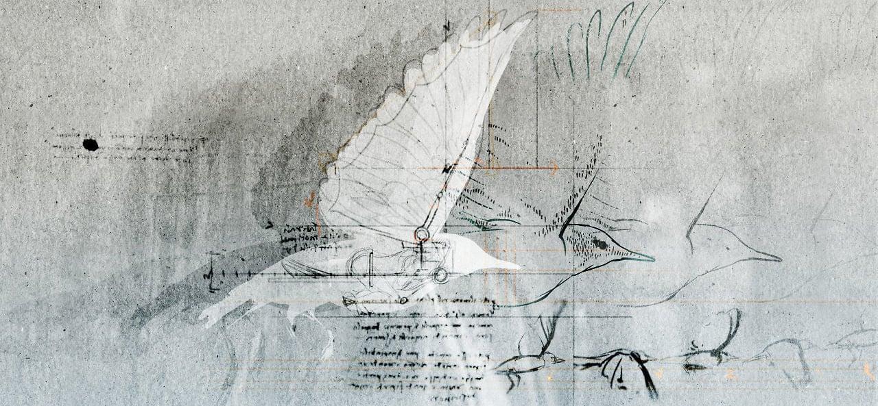 Drawings of from Leonardo da Vinci