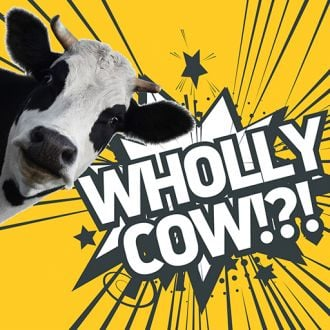 Thumbnail for the article 'Wholly cow!?!' by Pete Kempshall