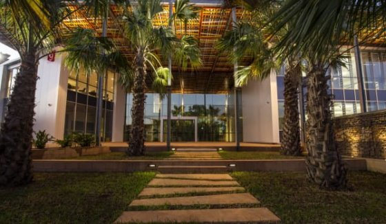 The canopies of the palms give way to the re-imagined tree canopy of the building's roof.